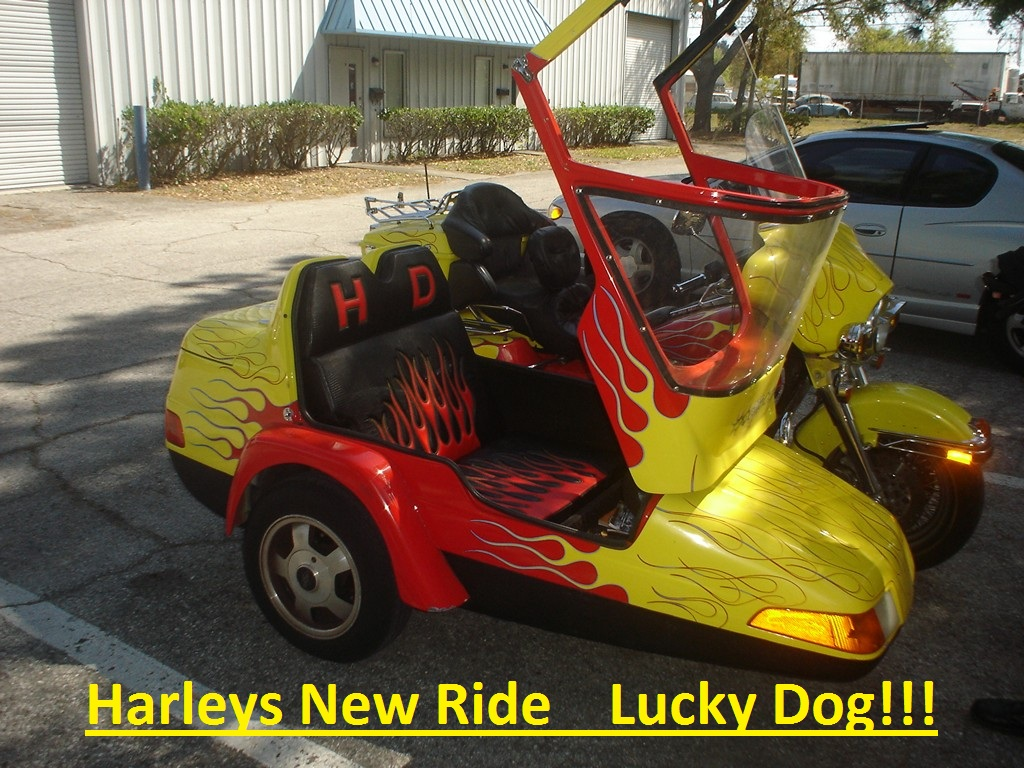Harleys Ride What a Lucky Dog